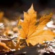 Dry autumn leaves — Stock Photo