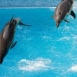 Two dolphins — Stock Photo
