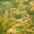 Wild  meadow - summer season — Stock Photo