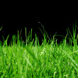 Grasses — Stock Photo #2509481