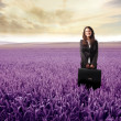 Lavender field — Stock Photo #2505402