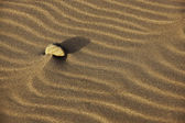 Single stone in sand — Stock Photo