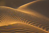 Sand dunes in evening sun — Stock Photo