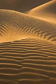 Desert dunes in evening sun — Stock Photo
