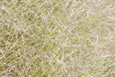 Background of blades of grass in dayligh — Stock Photo