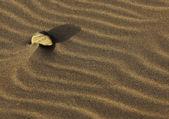 Pierre sur le sable — Photo