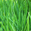 Stock Photo: Background image of tall grass