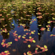 Stock Photo: Water plants floating