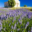 Chapel with lavender field — Stockfoto