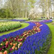Keukenhof Gardens, Lisse, Netherlands — Stock Photo #2517018