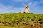 Vineyard in France — Stock Photo