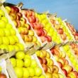 Apples — Stock Photo #2599400