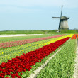 Stock Photo: Netherlands