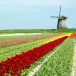 Netherlands - Stock Photo