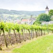 Vineyard in Austria — Stock Photo #2601076