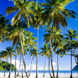 Maracas Bay - Stock Photo
