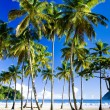 Maracas Bay — Stock Photo #2638744