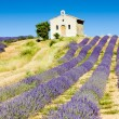 Plateau de Valensole — Stock Photo #2655720
