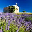 Plateau de Valensole - Stock Photo