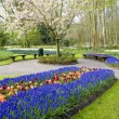 Keukenhof Gardens — Stock Photo #2660868