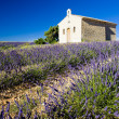 Plateau de Valensole — Stock Photo #2678016