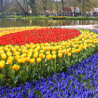 Keukenhof Gardens — Stock Photo #2678317