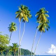 Maracas Bay — Stock Photo