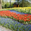 Keukenhof Gardens — Stock Photo #2681358