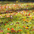 Autumn Lawn — Stock Photo