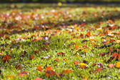 Autumn Lawn — Stock Photo