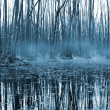 Misty forest om bog — Stock Photo #2435579