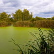 Landscape with green bog — Stock Photo