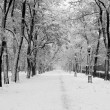 Snowstorm in city park — Stock Photo #2541554