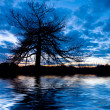 Stock fotografie: Night landscape with tree