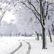 Stock Photo: Winter road in park