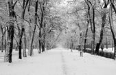 Snowstorm in city park — Stock Photo
