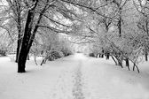 Track in park at winter — Stock fotografie