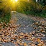 Autumn in park — Stock Photo