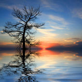 Dead tree in water on sunset background — Stock Photo