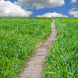 Path across green field — Stockfoto