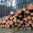 Pile of fire wood logs — Stockfoto