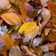 Royalty-Free Stock Photo: Atumn leafage