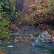 Autumn landscape with mountain river — Stock Photo