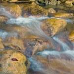 Arroyo de montaña — Foto de Stock   #2623309