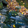 Nice stream among autumn foliage — Stock Photo