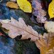 Stock Photo: Wet autumn leafage