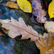 Foto Stock: Wet autumn leafage