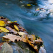 Stock Photo: Autumn leafs near quick mountain stream