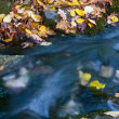 Nice autumn stream — Stock Photo