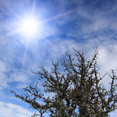 Sun in the sky over top of the tree — Stock Photo